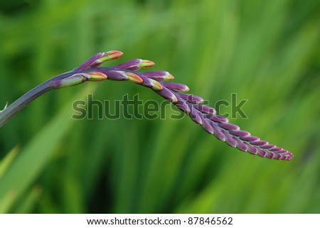 Flower stem with buds over green background - stock photo