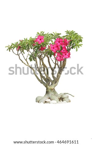 flower tree isolated background,pink flower isolated for retouch