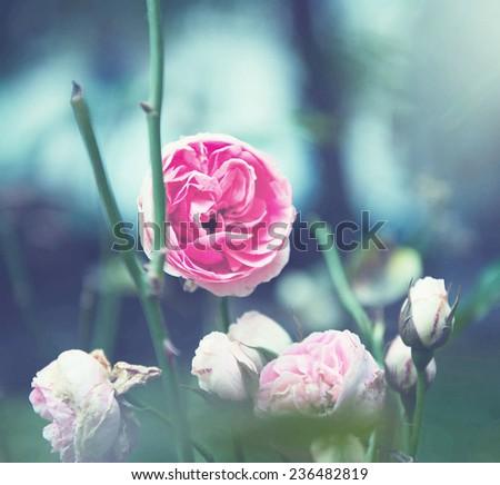 Flower vintage - stock photo
