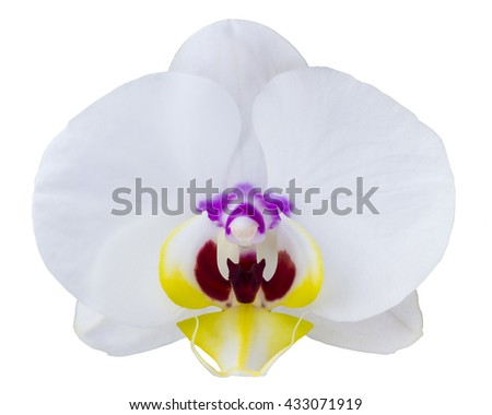 Flower white orchid with purple and yellow veins isolated on a white background