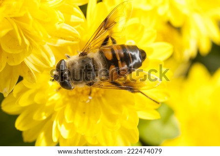 Flower with bee, pollination  - stock photo