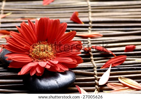 Flower with petals in the spa - stock photo