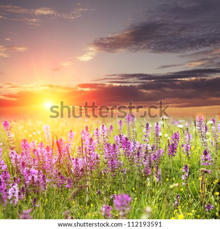flower with sunset - stock photo