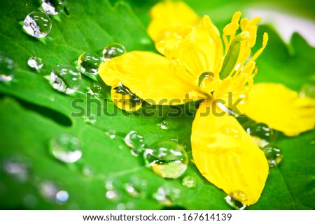 flower with water bubbles - stock photo
