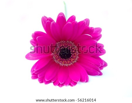 Flower with white background - stock photo