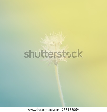 flower with yellow and green color tone in soft style for background