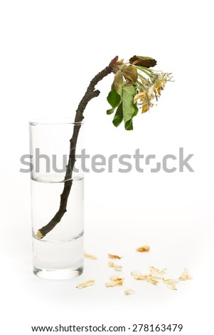 flower withers time - stock photo