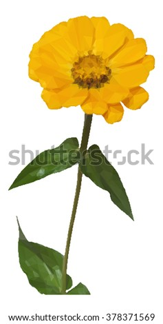 Flower Zinnia Low Poly Isolated on White Background.