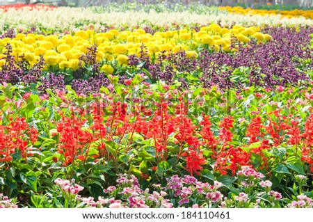 flowerbed. colorful flowers