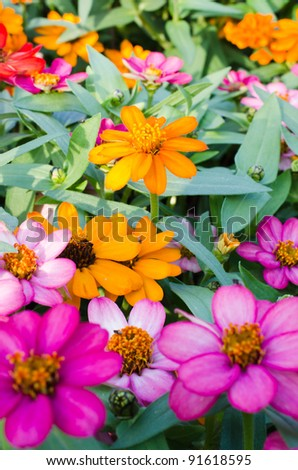 flowerbed colorful flowers - stock photo