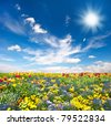 flowerbed. colorful flowers over blue sky - stock