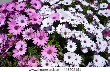 Flowerbed with white and violet wildflowers - stock photo