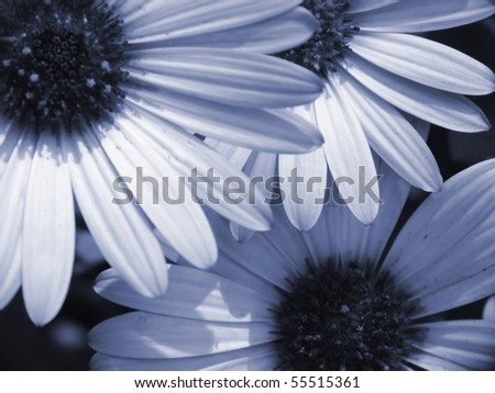 flowered cover, background