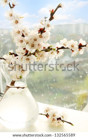 flowering apricot branch in a vase on the window - stock photo