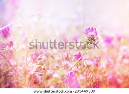 Flowering beautiful red clover in meadow - stock photo
