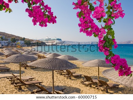Flowering bougainvillea on the beach against  the Mediterranean Sea and the cruise liner. - stock photo