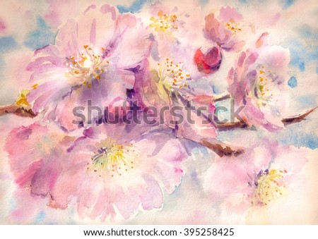 Flowering branch of the cherry tree watercolor painted