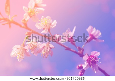 Flowering branch with pink delicate flowers on wooden surface. D - stock photo