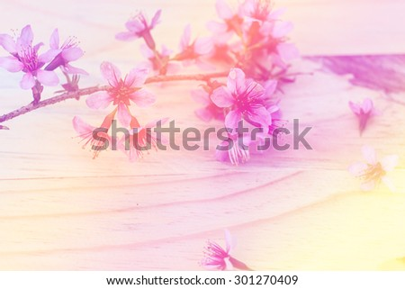Flowering branch with pink delicate flowers on wooden surface. Declaration of love, spring. Wedding card, Valentine's Day greeting. Wedding background. Sweet flower blurred style for soft background. - stock photo