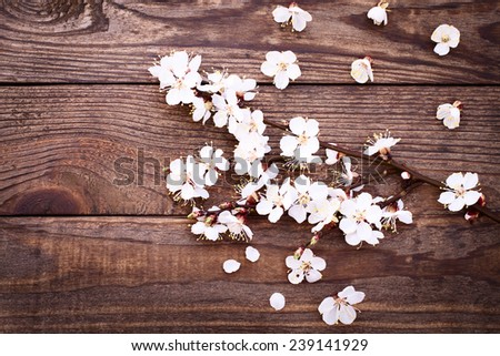 Flowering branch with white delicate flowers on wooden surface. Declaration of love, spring. Wedding card, Valentine's Day greeting. Wedding background. - stock photo