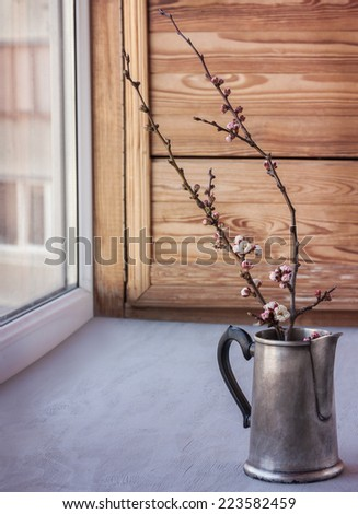 Flowering branches in the coffee pot on the window. spring still life - stock photo