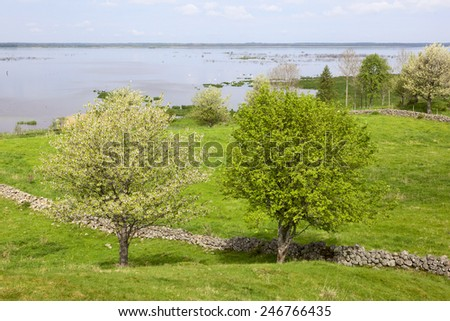 Flowering cherry trees in the meadow by the lake - stock photo