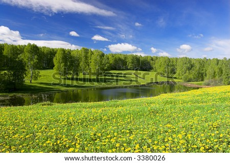 Flowering dandelions and forest pond - stock photo