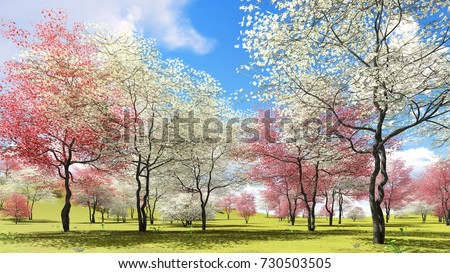 Dogwood trees pagoda dogwood information u2013 what are pagoda dogwood growing conditions pink - Spring trimming orchard trees healthy ...