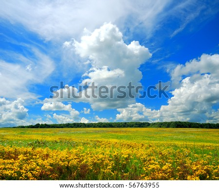 Flowering field and blue sky with clouds - stock photo