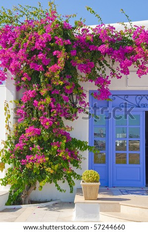 Flowering Flowers bougainvillea at the door - feature Mykonos and Greece - stock photo