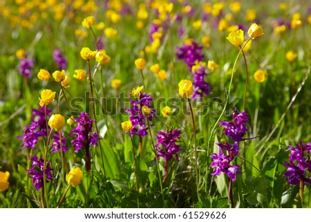 Flowering meadow with yellow and purple flowers - stock photo