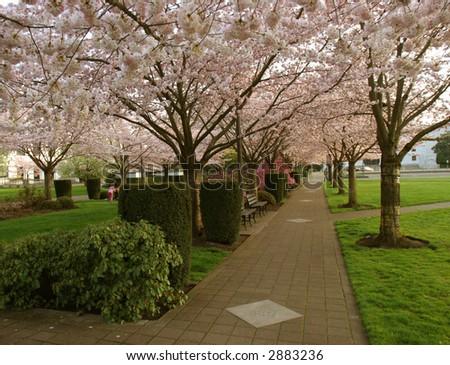Flowering Park - stock photo