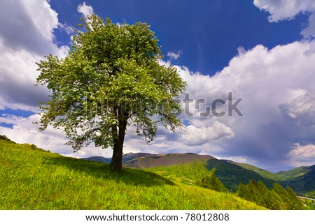 flowering pear tree in spring in the mountains - stock photo