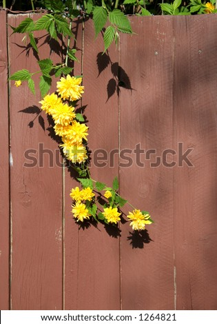 Flowering plant on fence - stock photo