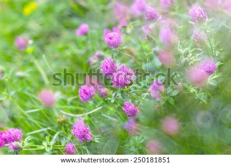 Flowering red clover in a meadow - stock photo