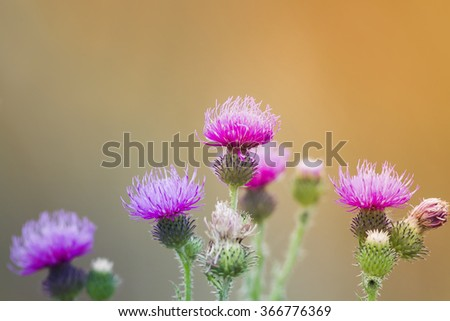 flowering thorn - stock photo