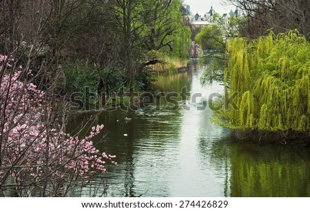 Flowering tree and lake in the St. james's park. Spring theme. London city in the background. - stock photo