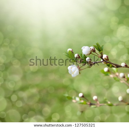 flowering tree covered with flowers, buds, buds and leaves - stock photo