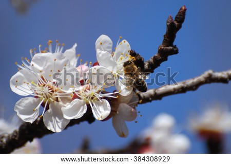 Flowering tree with bee