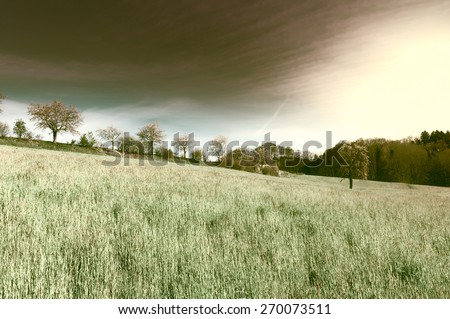 Flowering Trees Surrounded by Sloping Meadows in Switzerland at Sunset - stock photo