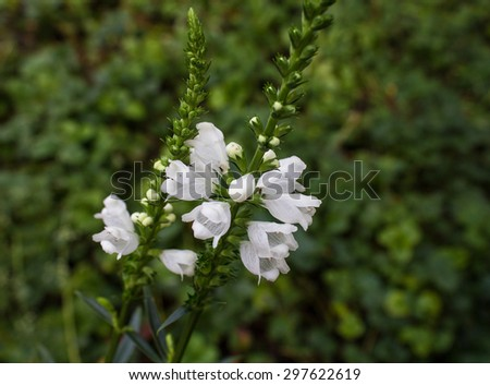 Flowering white wildflowers in a meadow. Nature - stock photo