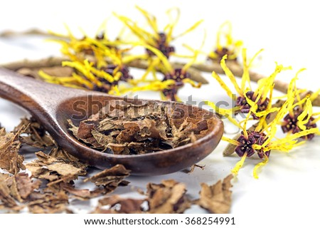 flowering witch hazel (Hamamelis) and wooden spoon with dried leaves for homemade skin care cosmetics and bath additive on a white background, closeup with selected focus, narrow depth of field - stock photo