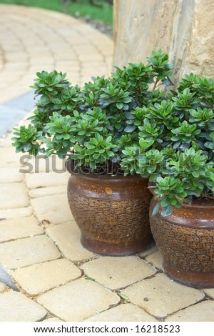 Flowerpot with beautiful leaves on a stone - stock photo