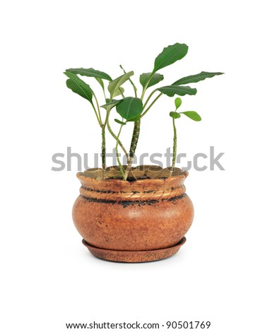 Flowerpot with green plant on white background. Isolated with clipping path