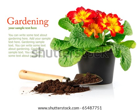 flowerpot with red flowers and soil in shovel isolated on white background - stock photo