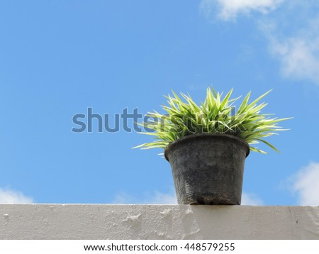 Flowerpots and house plants on the balcony,small plant in a pot on a sun shiny day with blue sky background.           - stock photo