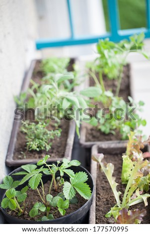 Flowerpots with herbs on a balcony. Shallow dof - stock photo