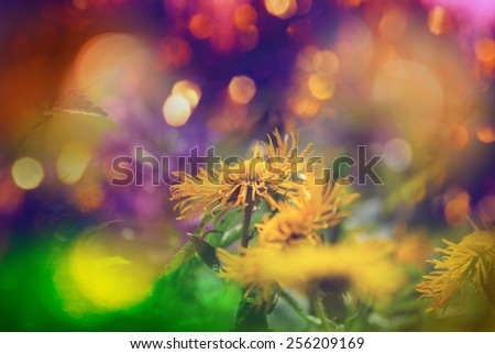Flowers - stock photo