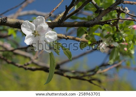 Flowers. - stock photo