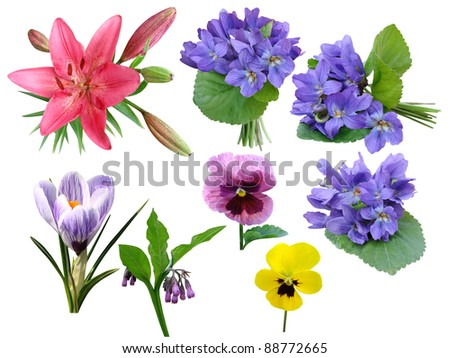 Flowers a collection it is isolated on a white background - stock photo